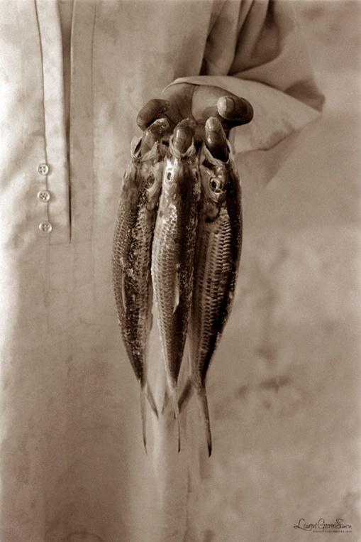 ©1987 Saint-Louis au Sénégal. A Guet Ndar, plus qu'une tradition Le poisson est une religion.