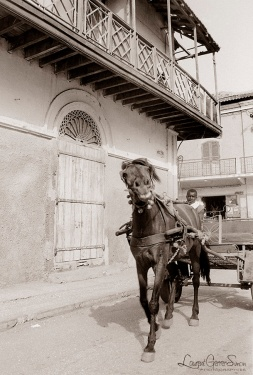©1988 Saint-Louis au Sénégal. Borom saret
